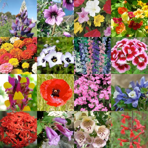 Hummingbird Flower Mix Flower Seed Mix For You