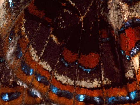 Butterfly Close-Up photographed by Darlyne A. Murawski
